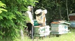 Beekeepers are engaged on the work near forest3 - stock footage