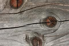 Old faded wooden board with annual rings - stock photo