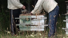 Beekeepers are engaged on the work near forest4 Stock Footage