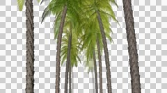 Trees moving to the camera Animation with alpha Stock Footage