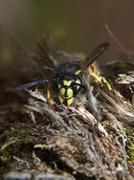 Wasp Stock Photos
