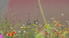 Two birds on flowers Stock Footage