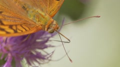 Butterfly On Flowers close up Stock Footage