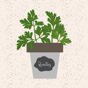 Vector - Fresh parsley herb in a flowerpot. Aromatic leaves used to season me - stock illustration