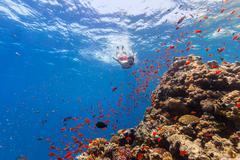 Freediver woman exploring coral - stock photo