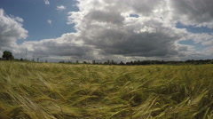 Landscape with ripening barley in summer  with cloudy sky, 4K Stock Footage