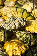 Warted Patission cucurbita pumpkin pumpkins from autumn harvest - stock photo