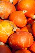 Red roter Hokkaido cucurbita pumpkin pumpkins from autumn harvest Stock Photos