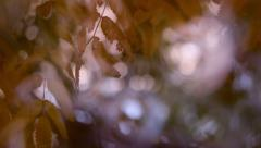 Dreamy panoramic view of autumn scene with fantasy light and gentle breeze Stock Footage