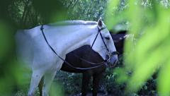 Three horses in the bush Stock Footage