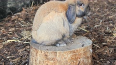 Rabbit bunny sitting and having a snack Stock Footage