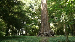 Sequoia tree at a botanical garden Stock Footage