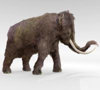Woolly Mammoth - stock illustration