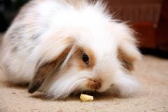 One young bunny rabbit Stock Photos