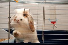One young bunny rabbit - stock photo