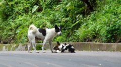 Mother dog lead her puppies on the road Stock Footage
