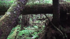 Flowing rain forest waterfall, Tongass National Forest Stock Footage