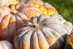Muscade de Provence cucurbita pumpkin pumpkins from autumn harvest - stock photo