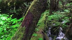 Lush green splashing waterfall, rain forest green Stock Footage