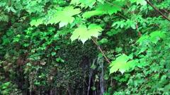 Alaskan Waterfall, lush green rain forest Stock Footage
