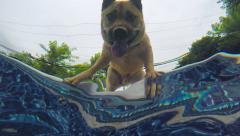 Underwater As Dog Looks Into Pool Stock Footage