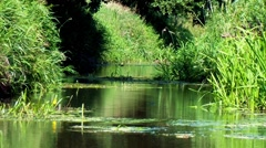 Quiet brook HD Stock Footage