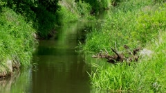 Quiet river footage in full HD Stock Footage