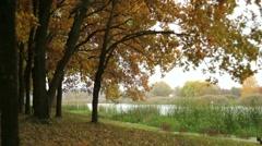 Oak grove on a riverbank Stock Footage