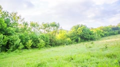 Wastes Scattered On Green Grass In Forest Stock Footage