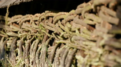 Fence made of twigs at the museum in Sibiu - stock footage