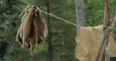 Animal pelts hang on rope Stock Footage