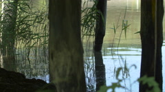 View of the lake at the Open Air Museum in Sibiu Stock Footage