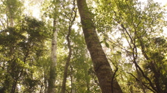 High angle view of sunlight through forest - stock footage