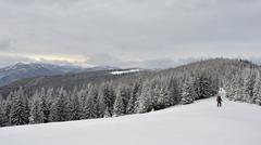 Winter landscape in the Carpathian mountains Stock Photos