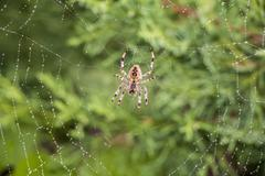 Spider in its net Stock Photos