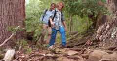 Family walking uphill through forest, back view - stock footage