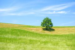 Stock Photo of Green Farmland with Tree, Blue Sky