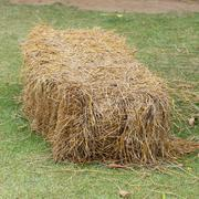 pile of straw used animal food in farm - stock photo