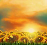 Summer, Field, Sky, Sun, Sunset, Grass, Sunflowers, Butterflies - stock illustration