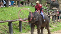 Elephant Show.5 Stock Footage