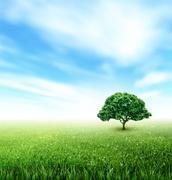 Summer, Field, Sky, Tree, Grass, Flowers - stock illustration