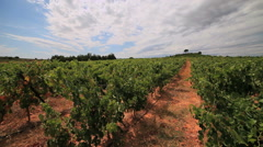 Languedoc vineyards - south of France - PAN3 Stock Footage
