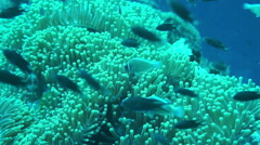 Beautiful coral reef with school of fish - stock footage