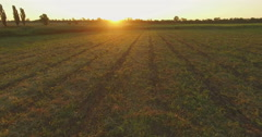 Aero Flight over the clear field in sunset - stock footage