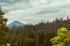 Summer landscape in Carpathians Stock Photos