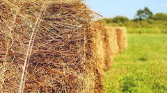 sheaves of hay in the field - stock photo