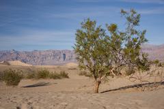 Death Valley's Sand Dunes - stock photo