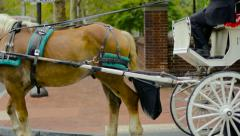Horse Drawn Carriage Stock Footage