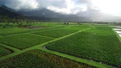 Aerial View of Organic Taro Farm in Kauaii, Hawaii Stock Footage