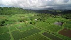 High Altitude Aerial View of Organic Taro Farm in Kauai, Hawaii Stock Footage